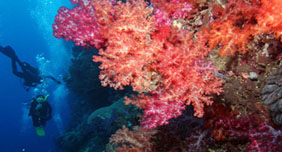 extinction risks for coral reefs essay Is the end in sight for the world's coral and the sixth mass extinction will be upon us — and will be of is the end in sight for the world's coral reefs.